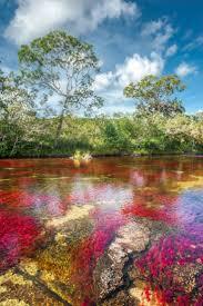 most beautiful places in america cano cristales en el sector el tapete 681x1024 w a n d e r