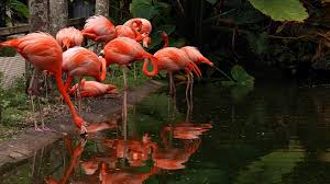 botanical garden wildlife sanctuary flamingo gardens fort