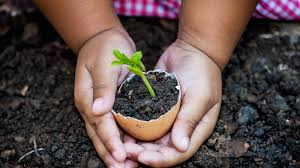 planting trees for tu b shevat my learning
