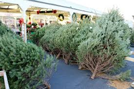 Fraser Christmas Tree Permit by Christmas 2014 Where To Buy The Best Christmas Tree How To Pick