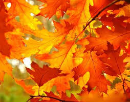 best 25 fall paint colors ideas on pinterest warm paint colors