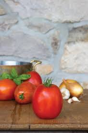 the best tomatoes for making sauce paste tomato varieties hgtv