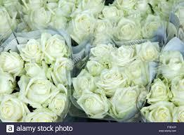 white roses for sale white roses for sale in central market rotterdam stock