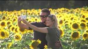 Grinter Farms Few Changes To Sunflower Farm Thousands Of Visitors Heavy Labor