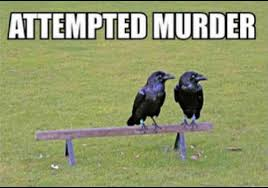 Attempted Murder Meme - attempted murder funny