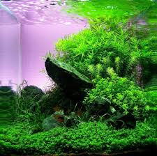 Aquascape Layout 138 Best Aquariums Images On Pinterest Aquarium Ideas Aquariums