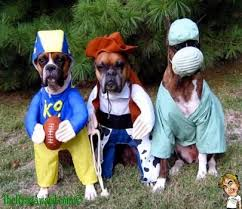 boxer dog funny the ryan award funny pictures and funny videos 3 awesome boxer