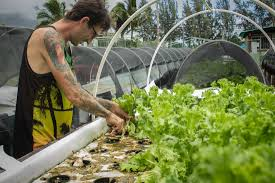 aquaponic and hydroponic loveland academy vocational training