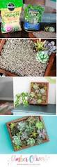 How To Make A Moss Wall by Best 25 Succulent Wall Planter Ideas On Pinterest Succulent