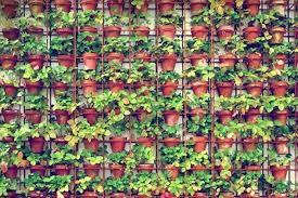 How To Make Vertical Garden Wall - joost bakker u0027s vertical gardens gardenista