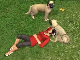 sims 3 australian shepherd template turkish dogs particularly anatolian shepherd dogs november 2008