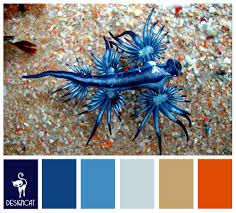 blue dragon royal blue pastel sand beige orange colour