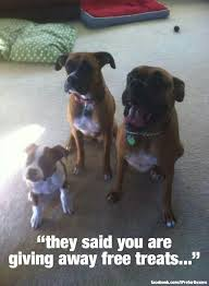 boxer dog sayings 245 best boxer quotes images on pinterest animals boxer love