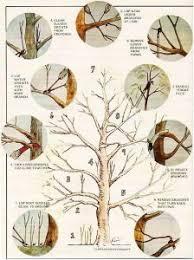 tree felling centurion tree felling pretoria prices 071 737 0338