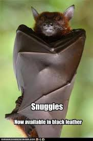 193 best b is for bats images on pinterest animal babies baby