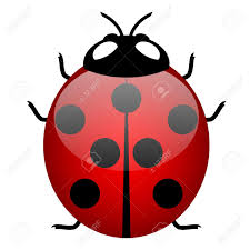 illustration of ladybird symbol of good luck royalty free