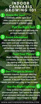 best light for weed seedlings 340 best growing marijuana at home images on pinterest marijuana