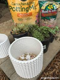how to care for succulent plants a cup full of sass
