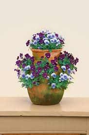 Flower Boxes That Thrive In by Best 25 Full Sun Flowers Ideas On Pinterest Perrenial Flowers