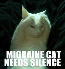 Anxiety Cat Memes - animal memes that perfectly illustrate pms cuteness