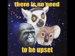 Gorilla Warfare Meme - beautiful gorilla warfare meme that really rustled my jimmies video