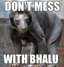 Koala Bear Meme - shaved bear don t mess with bhalu weknowmemes