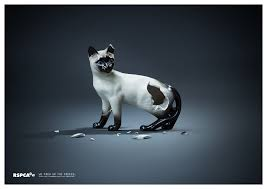 evocative print ad from the rspca cats marketing advertising