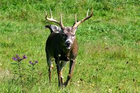 West Virginia wild animals images What wild animals live in west virginia all pictures top jpg