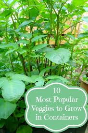 10 Vegetables U0026 Herbs You by 10 Most Popular Vegetables To Grow In Containers Container