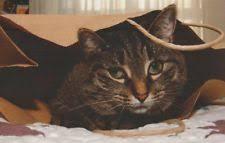 funny cat birthday card ebay
