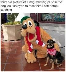 Silly Dog Meme - 28 hilarious dog memes for 2018 quoteshumor com quoteshumor com