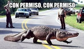Alligator Memes - con permiso meme buscar con google memes pinterest