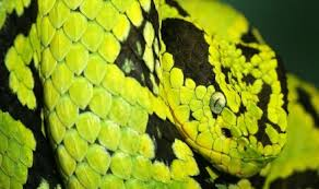 a green snake wallpapers green snake rolling in tree wallpapers name photo background