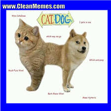 Funny Cat And Dog Memes - cat dog clean memes