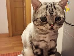 Cat Instagram Don U0027t Be Sad Luhu Instagram Kitty Gains Fame Hlntv Com