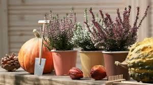 herbstbepflanzung balkon herbstbepflanzung für garten balkon wohnung sina s welt