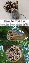 best 25 garden insects ideas on pinterest garden bugs house