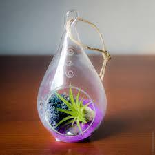 hanging glass teardrop air plant terrarium air plant worlds