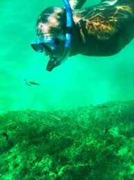 Wyoming snorkeling images Snorkeling in cabo san lucas a complete family guide jpg