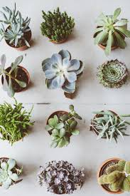 succulent planter top 5 succulent planter types botanical deer