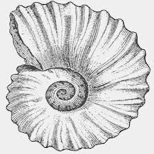 fossils coloring page free download