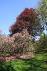 Botanical Garden In Bronx by 127 Best New York Bronx Botanical Garden Images On Pinterest