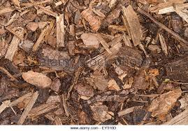 wood chip bark ground cover stock photos u0026 wood chip bark ground