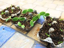 Gardening Crafts For Kids - egg carton seed starts crafts for kids pbs parents pbs