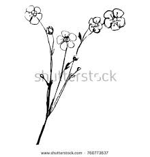 flowers drawing poppy flower vector illustration stock vector