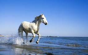 mustang horse running white horse running on the beach wallpaper 94 1920x1200