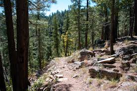 Arizona forest images Mccain and flake call for ramped up forest treatments in arizona jpg