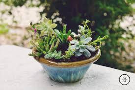 indoor succulent garden archives succulent gardening