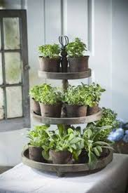 kitchen herb garden ideas ideas for growing herbs right in your kitchen herbs indoors