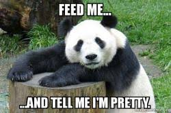 Feed Me Meme - feed me and tell me i m pretty confession panda make a meme